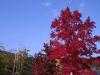 あすたむらんど徳島の紅葉