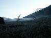 群生地にたなびく朝靄